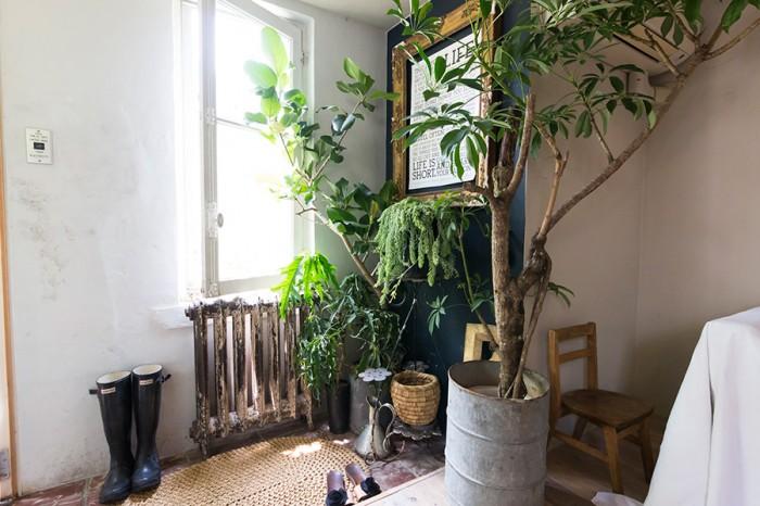 玄関の植物はゴムの仲間のフィカス・シーマとシェフレラ。