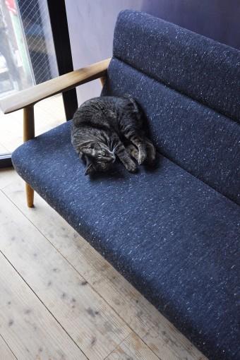 2階のソファでくつろぐこはだ。こはだはいつも人間の近くで行動している。