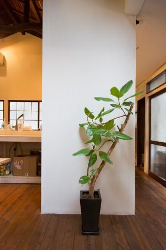 全ての壁は強度を増すためにコンパネを貼り、白く塗装。畳1枚の大きさのものを家全体で120枚くらい使用。