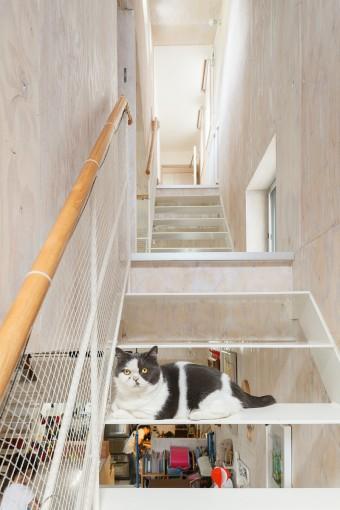 スチールの階段にどっしりと座る、木暮家の愛猫レン。
