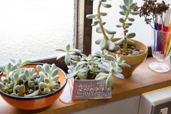 キッチンの窓には多肉植物が潤いを与える。家の周りではハーブ類も育てている。