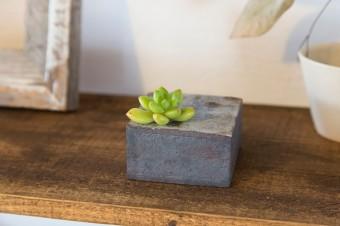 鉄のような質感の陶の花器に、多肉植物を挿して。