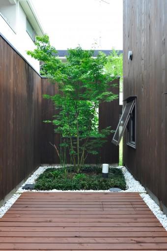 敷地のいちばん奥の位置にも緑が植えられている。