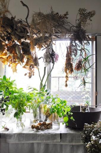 自然光が入る室内は植物たちとじっくり向き合える。