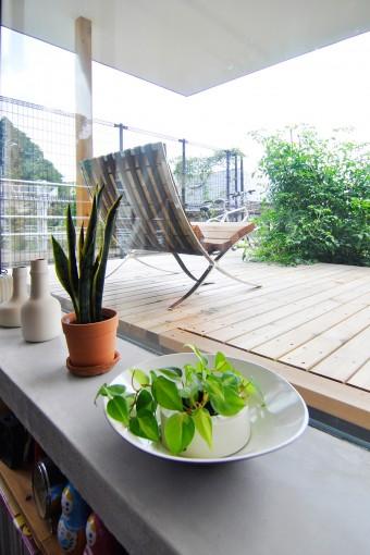 外の緑はすべて料理に使えるもの。トマト、バジル、レモン、シソ、ピーマンなどが植えられている。
