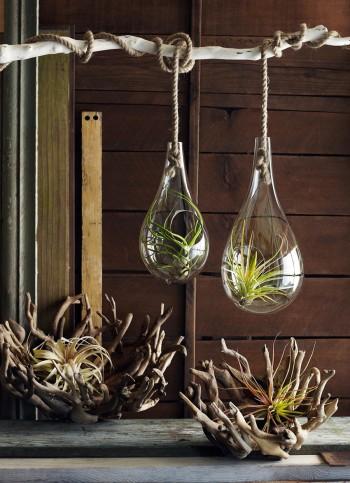 《Bubble Hanging Terrarium》