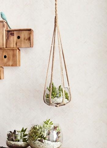 《Hanging Terrarium》