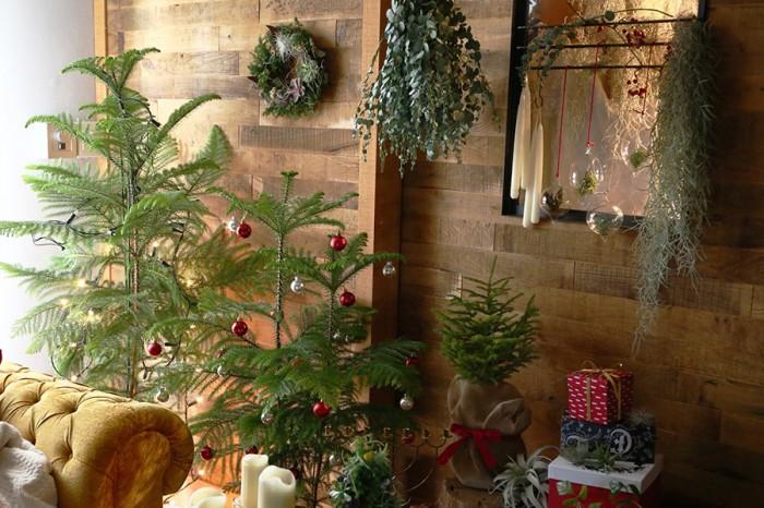 左からナンヨウスギツリー H約1250mm ¥7,500 エゾマツミニツリー H約400mm ¥5,150 GREENDRESS PROJECT/FELISSIMO