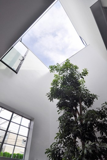 玄関前の空間に植えられたヤマモモの木。
