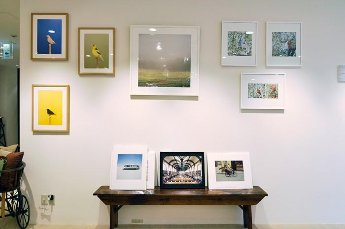 写真左側の作品はイギリス人フォトグラファー、ルーク・ステファンソンの『The Incomplete Dictionary of Show Birds 』。色とりどりの鳥をカラフルな背景でグラフィカルに撮った作品。