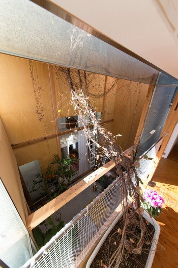 テイカズラは、お母さんの寝室になっている2階の部屋の鉢から枝を伸ばす。棟と棟はグルリとガラスで結ばれている。