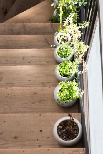 階段の踏み板には、味のある中古の木材を使用。明るい窓際にグリーンを並べている。