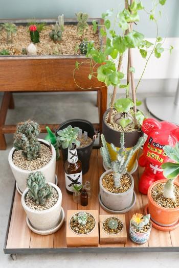 リビングの一角で癒しを与えてくれる多肉植物たち。手前の木の植木鉢は家具工房のオリジナル製品。