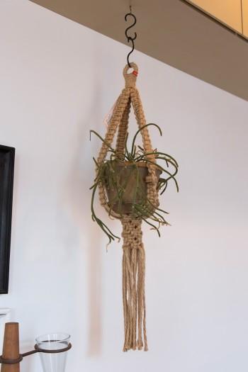 リビングの中で存在感を放つ植物。ホルダーは「Losango」でも販売。