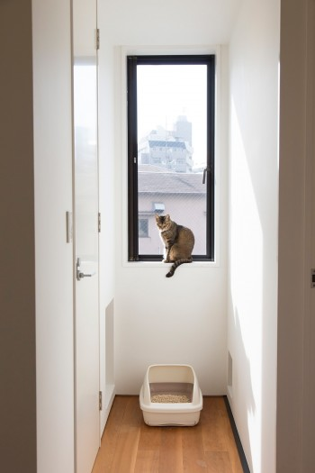 猫の宗介。壁にはドアを閉めても自由にトイレに行けるように穴が開けられている。