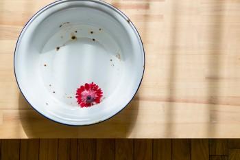 ブリキの水盤に、アネモネを浮かべて。折れたり枯れたりした花もアレンジして活用。
