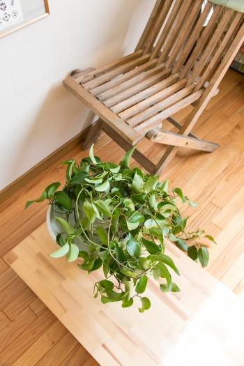 やさしいグリーンが部屋になじむ。椅子は都立大の「Horta」で購入。