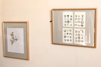 クレマチスの種や、訪れた美術館で買った絵はがきなどを額縁に。