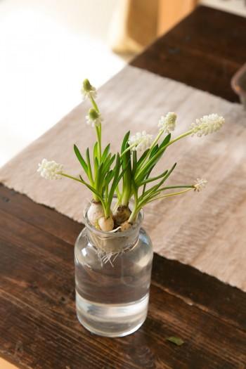 テーブルの上のムスカリ。季節の花を愛おしむ暮らしが伝わる。