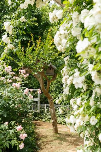 レンガ敷きのアプローチの手前には、シンボルツリーであるサルスベリが。枝にかけられたバードハウスは、啓介さんのお兄さんのお手製。このバードハウスに、シジュウカラが住みついたことも。