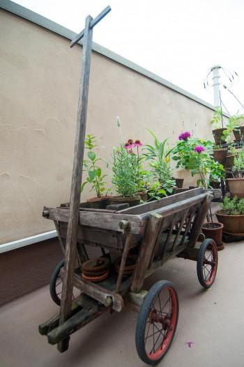 農家で使っていたイギリスのアンティークのキャリー。鉢植えを並べてディスプレイ。