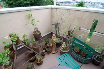 農薬を使わず育てている植物は虫を呼び、良い循環を生んでくれる。環境保護の聖人フランチェスコが見守る。