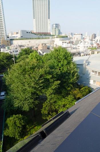 屋上から公園の緑を見下ろす。屋上でバーベキューパーティを開くのが楽しみという。