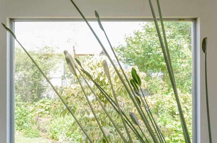 山﨑邸では室内でも植栽が置かれているが、これは山﨑さんの部屋にあったストレリチアノンリーフ。