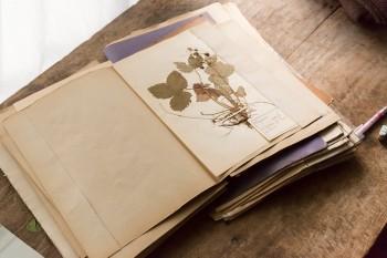 19世紀の押し花もたくさん保有。何気なく飾られ、生活に溶け込んでいるのがすごい。
