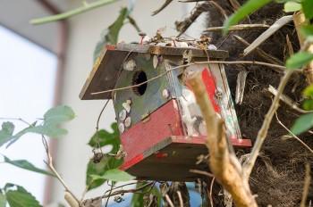 庭の鳥小屋は、のこぎりを使ってそらちゃんが作成。