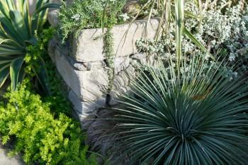 デレク・ジャーマン(イギリスの映画監督・作家・園芸家)がつくったドライな感じの庭が好きだという伸一郎さん。「それをイメージして植栽をえらびました」。