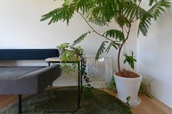 ソファの脇の植栽やモノクロームなリトグラフ作品が部屋のコーナーに静かな華やかさをもたらす。