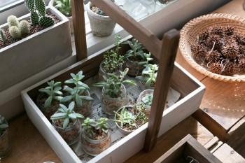 多肉植物やサボテンも育て、イベントなどに出店している。