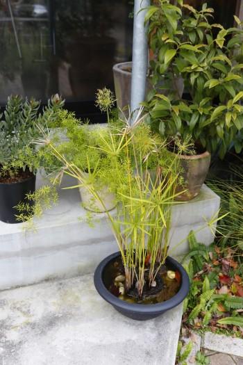 家のそこここに上手に緑が飾られている小松邸。「マンションに住んでいた頃から、植物の鉢はたくさんありました」