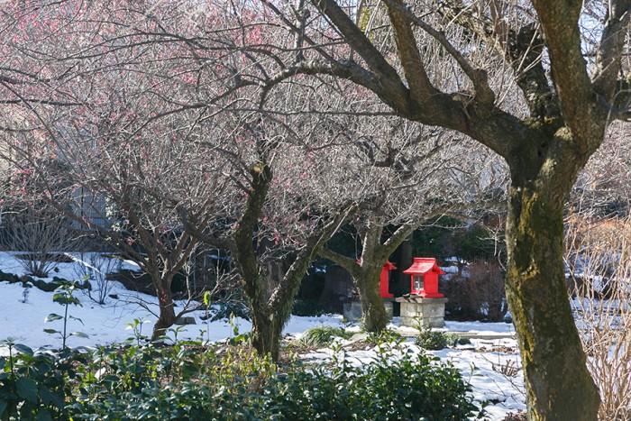 。梅の木は毎年たくさんの実をつけ、生徒さんにもいで帰ってもらっても追いつかないほどだそう。