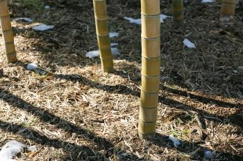 春には竹の子掘りも楽しめる。