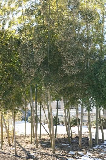 庭の一角にある立派な竹林。