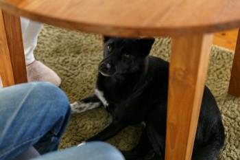 愛犬のNICO(ニコ)。保健所からひきとった雑種の男の子。「よく海を眺めています」(朋子さん)。