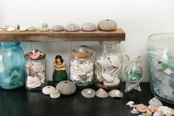 朋子さんの「海で拾ったものコレクション」。木の上のものはウニの骨格。「色や大きさが皆違っていて、つい集めてしまうんです」。