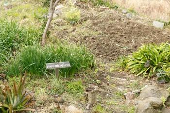 家庭菜園の名前は愛犬からとって「niconico farm」。シーズンには様々な野菜を育てている。