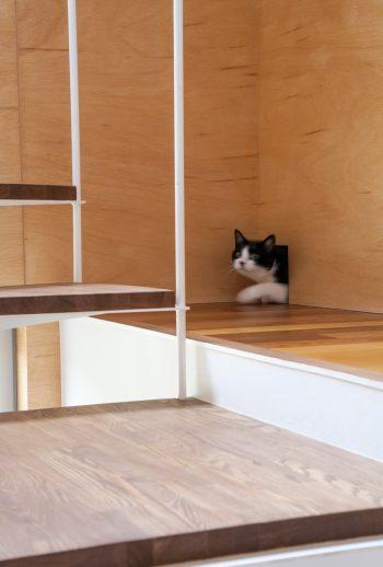 猫のムサシくん(10歳)専用の通り道が家全体で5か所設けられている。「ナンナ&ムサシ」の追いかけっこが時折見られるとか。