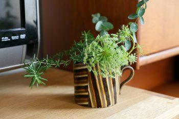 伊藤丈浩さんのマグカップを鉢がわりに。「残念ながら欠けてしまった器も別の用途に使っています」。