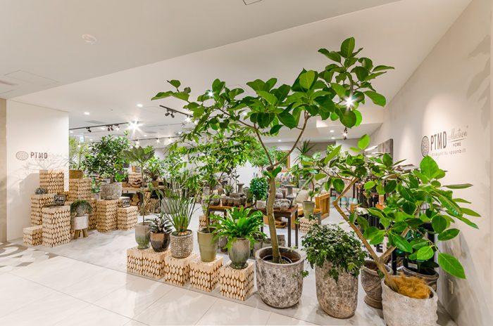 人の高さ以上ある大ぶりの観葉植物から手のひらサイズのものまでさまざまな大きさのグリーンを揃える。