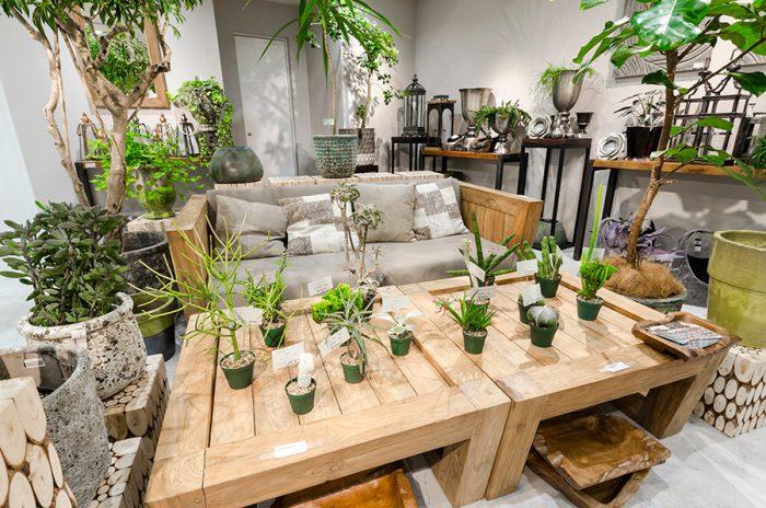 ソファやテーブルなど家具の大きさに合わせてグリーンの提案を行う。