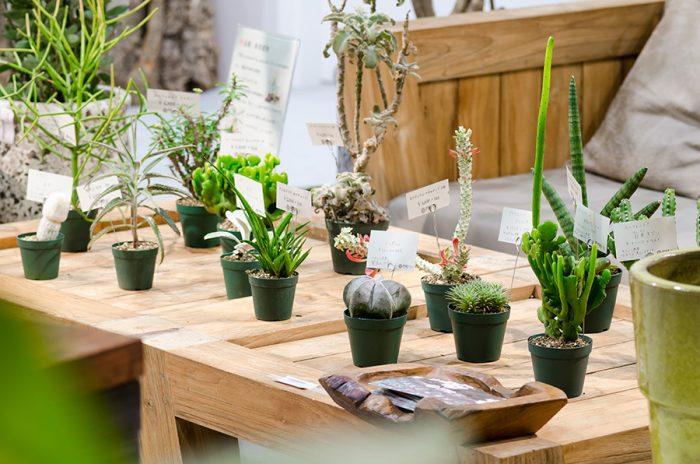 植物の個性が際立つよう、器はシンプルにまとめるのがおすすめ。