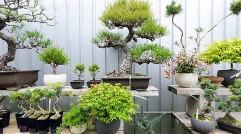 グリーンのある生活-2-新しいスタイルの盆栽を提案する「品品」