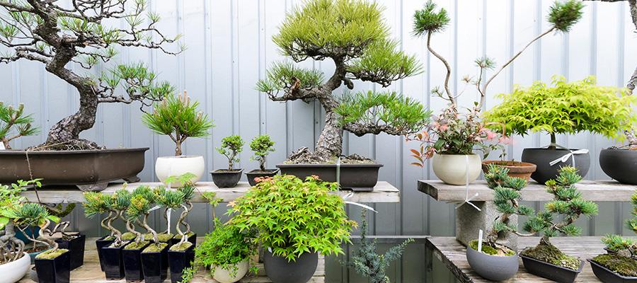 盆栽を提案する「品品」