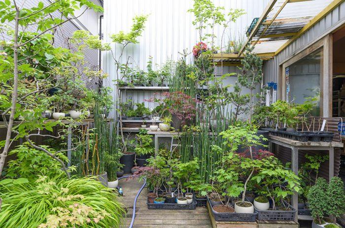 室内用はもちろん、庭用の背の高い植物もある。景色盆栽の技法を活かした庭やベランダなどの作り方なども提案している。