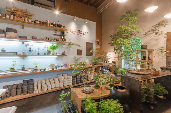 店内は元スタジオらしく、高い天井が印象的。ここでは景色盆栽の教室も行っている。