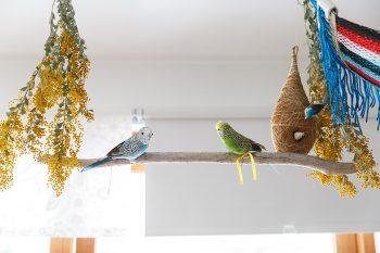 カフェスペースの天井には小鳥をディスプレイ。「鳥のさえずりをBGMで流すこともあります」。